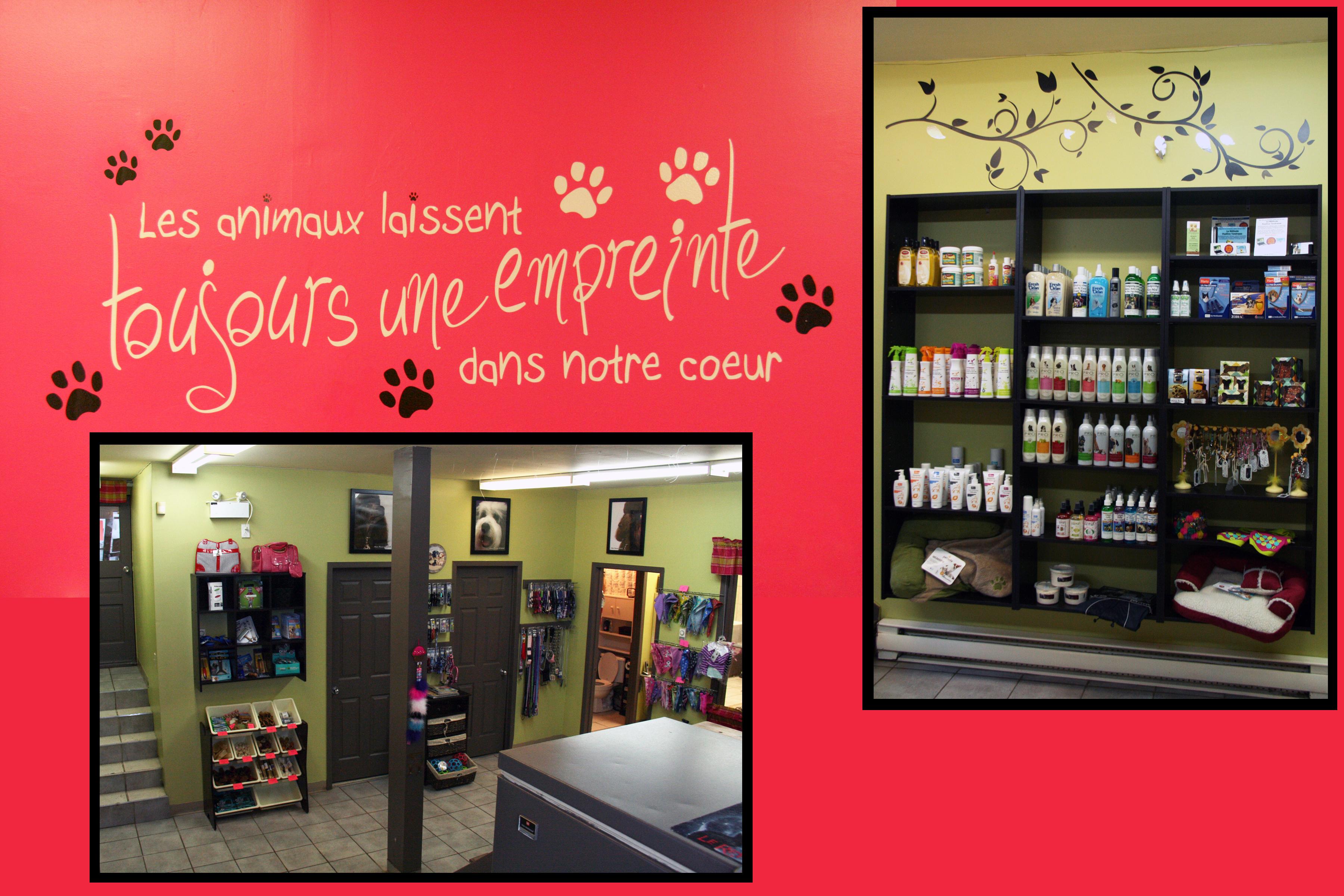D coration salon de toilettage - Salon de chat gratuit ...